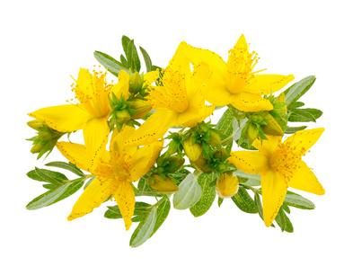 Liečivé bylinky - Ľubovník bodkovaný